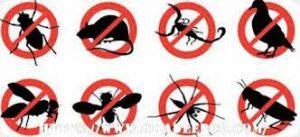 شركة مكافحة حشرات بالعوامية